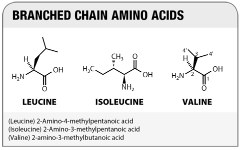 Branched Chain Amino Acids Building Blocks